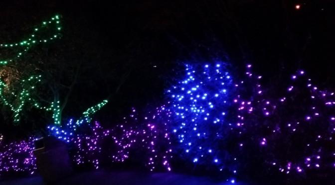 Wild Lights 2013
